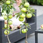 Hochbeete – perfekt für kleine Gärten, Dachterrassen oder Balkons