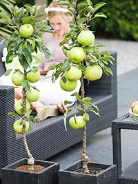 hochbeete perfekt f r kleine g rten dachterrassen oder balkons fragen bilder pflanz und. Black Bedroom Furniture Sets. Home Design Ideas
