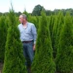 Hecke aus Lebensbäumen halbseitig komplett zurückgeschnitten – überleben die Thuja?