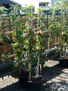 Gartenarbeiten im April – das sollte auf keiner ToDo-Liste fehlen