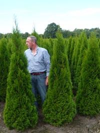 Fragen zur Thuja Smaragd für eine Hecke – reichen 30cm Substrat für eine 180cm Thuja?
