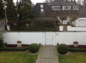 Hochstamm-Bäume für Sichtschutz über einer Mauer gesucht – Empfehlungen?