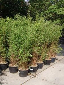 Welche Pflanzen schaffen eine locker-leichte Strandatmosphäre in einem Hof? Tipps & Empfehlungen
