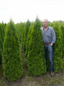Worauf müssen wir bei der Wässerung frisch gepflanzter Thujen und Zypressen achten?
