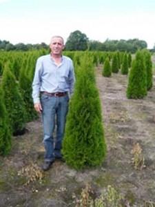Thuja occidentalis 'Smaragd' / Lebensbaum 'Smaragd'