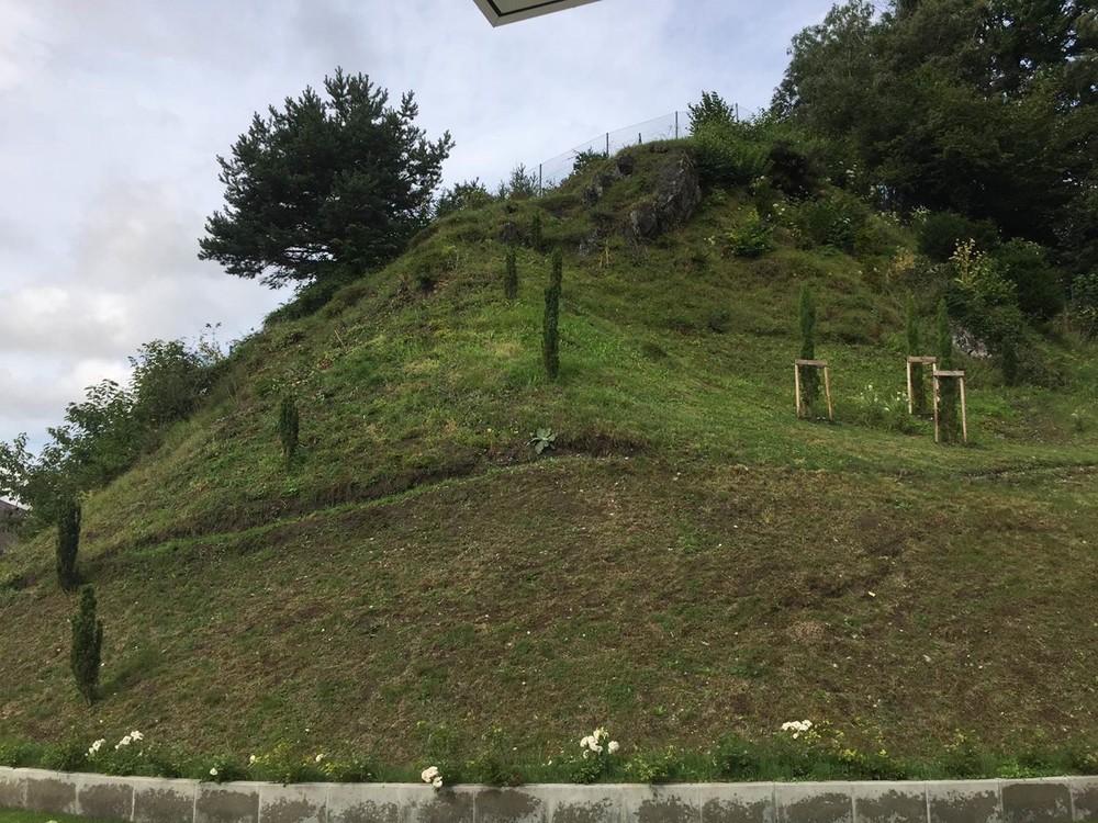 Bodendecker Als Bepflanzung Fur Steile Hanglage Gesucht Fragen