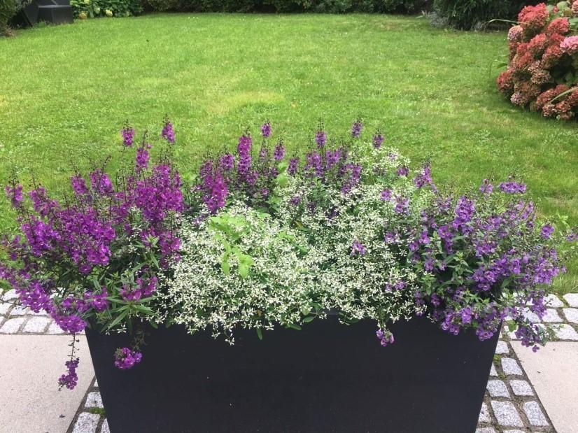 Garten Gestalten Welcher Pflanzkübel Ist Der Richtige Für Meinen