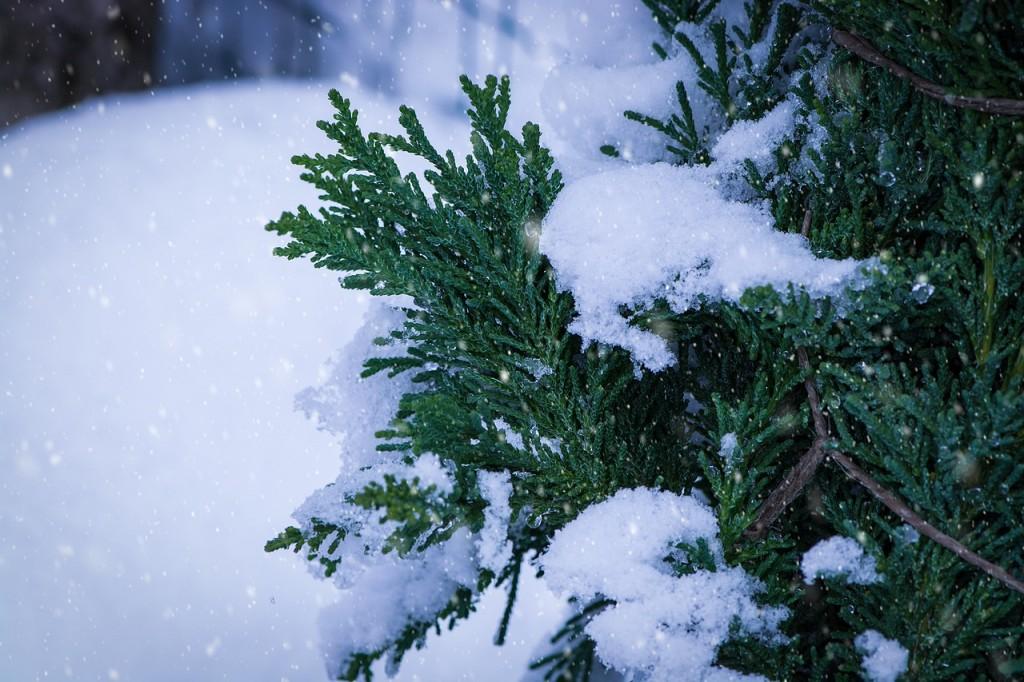 Gartenarbeiten im januar auch jetzt ruht die for Gartenarbeit im januar