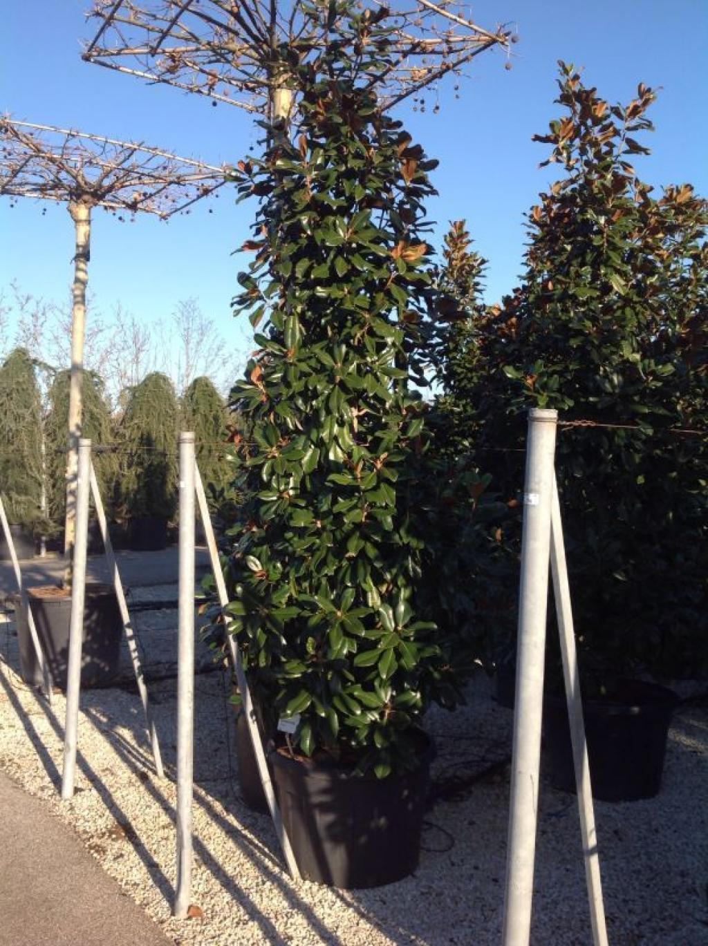 22 januar 2018 fragen bilder pflanz und for Gartenpflanzen versand