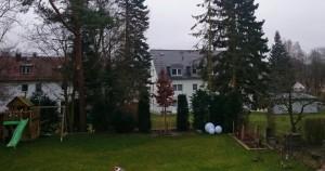 Standort_immergruener_Baum