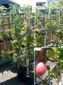 Gemüse im selbst gebauten Gewächshaus ziehen