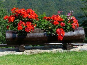 Kübelpflanzen brauchen regelmäßig Bewässerung