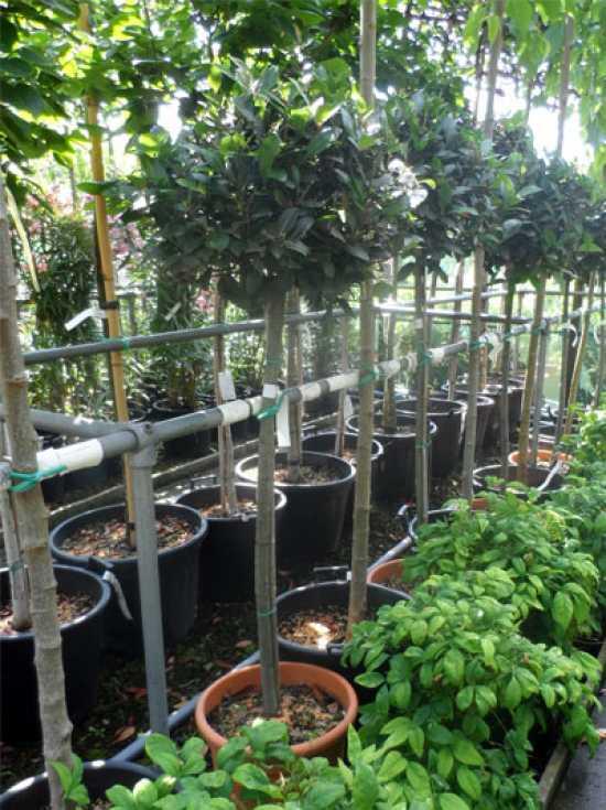 Terrasse fragen bilder pflanz und pflegeanleitungen for Gartenpflanzen versand