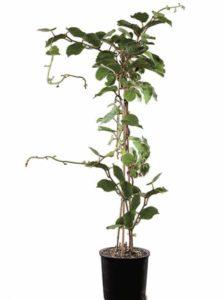 Mitarbeiter beschenken: 4 wertvolle Tipps für Pflanzengeschenke