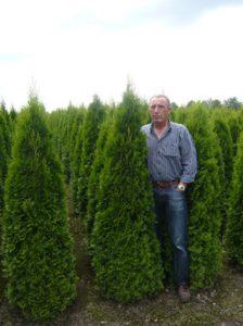 Tipps und Tricks zum Einpflanzen von Heckenpflanzen – so klappt es mit Ihrer neuen Hecke