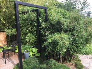 Bambus Fargesia Red Zebra®