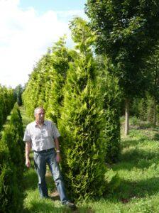 Bei größeren Zypressen kann es zu Lichtmangel an den inneren Trieben kommen