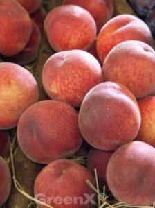 Prunus persica 'Suncrest' / Pfirsich 'Suncrest'